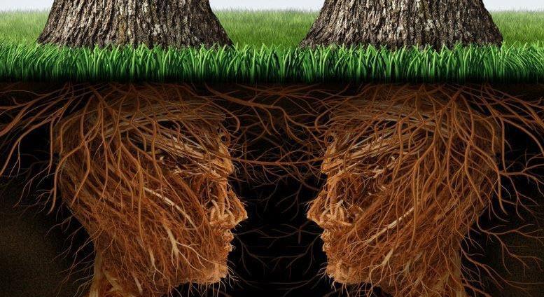 bomen met gezicht